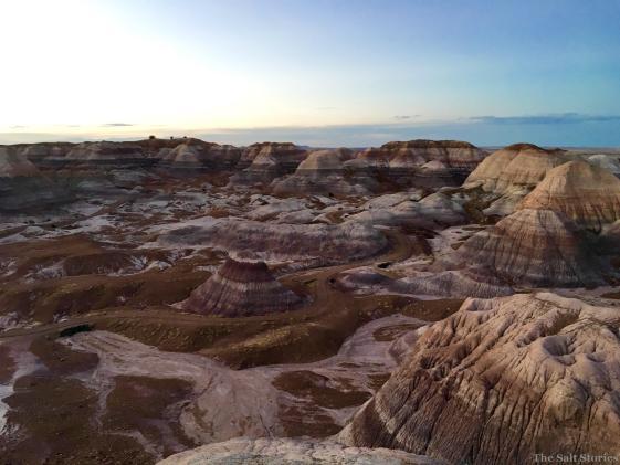The Salt Stories: Roo Trippin Vol 7: A Grand Petrified Albuquerque