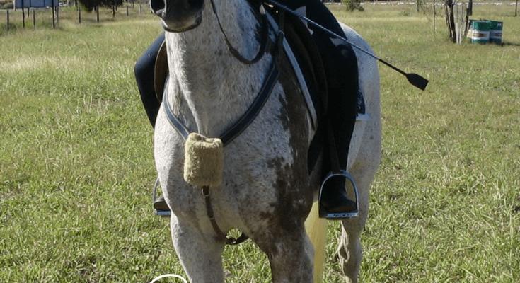 Concussion in Equestrian Sports