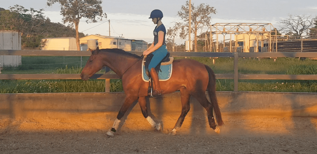 One of my goals this year is to progress in my bridleless riding