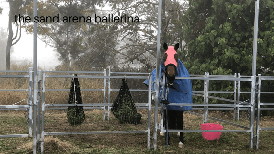 Perspective – Dressage competition report