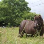 Peanut the Rescue Pony – Featured Pony
