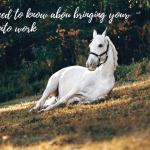 What you need to know about bringing your horse back into work