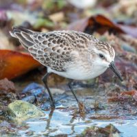 California Teachers Association honors Sandpiper for reporting of youth and education issues