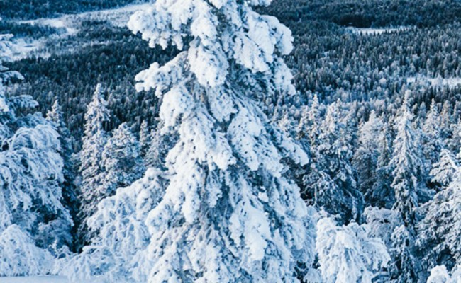 10 Wonderful Things To Do In Lapland In Winter Finland