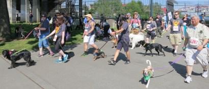 dogwalk 2
