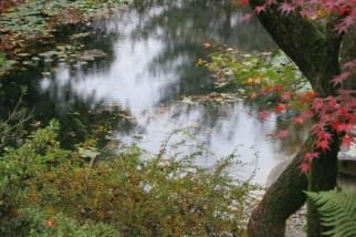 rain-in-pond-2