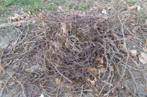 crows nest on ground