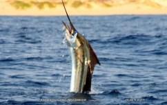 Duarte on camera duty (c) Duarte Rato Bazaruto winter sailfish