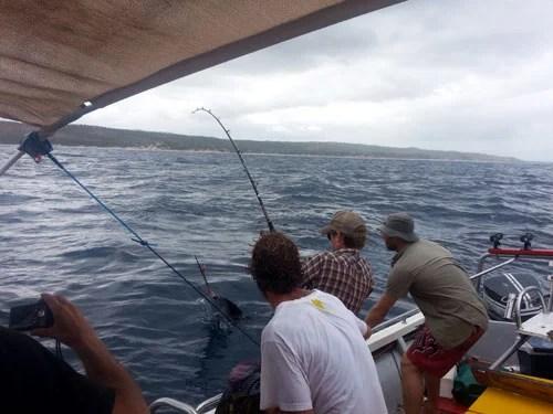 Chad Leavitt's first sailfish, released off Morrungulo, on the way to Pomene (c) BoaGente