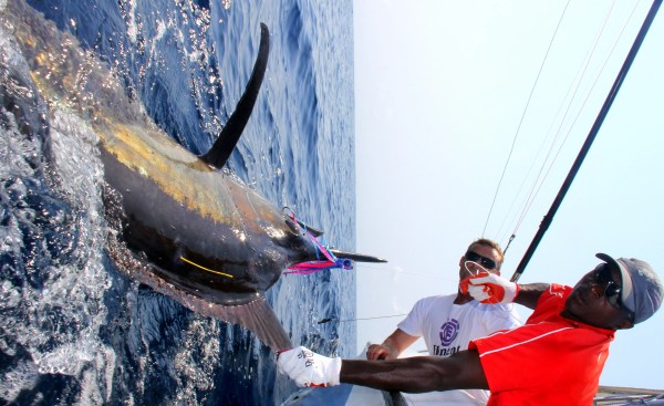 Tag and release fishing trips with The Sardine News and the Oceanographic Research Institute
