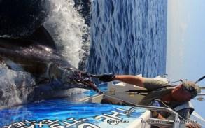 Black Big T - TT takes another blue marlin down...