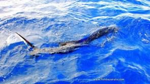 Natal snoek or sailfish? You can choose on the islands pal!Duarte Rato