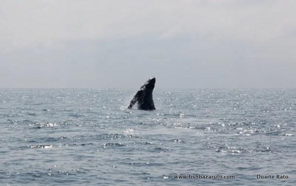 Whale Watching with the Sardine News team