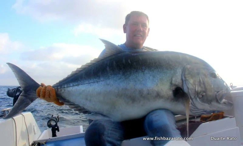 biggest bazaruto kingfish