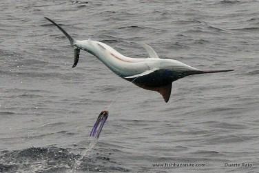 Ok its a marlin, but what a shot.
