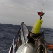 Protea Reef Tuna are suckers for the MYDO Luck Shot Mini