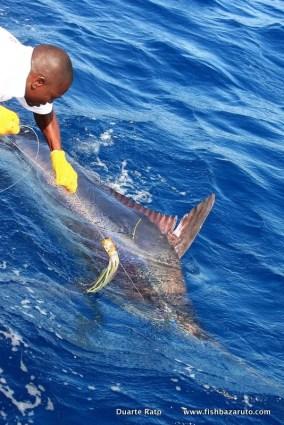 Bazaruto Blue Marlin