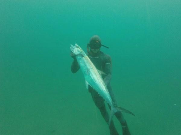 Spearfishing Vilankulos will get you plenty of king makerel attention