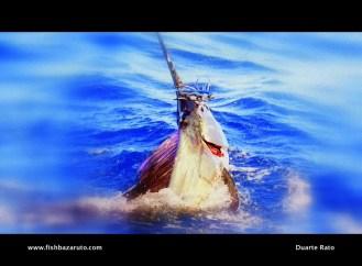 Bazaruto Sailfish by Captain Duarte Rato