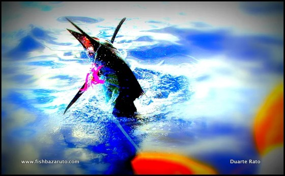Margaruque Sailfish by Captain Duarte Rato