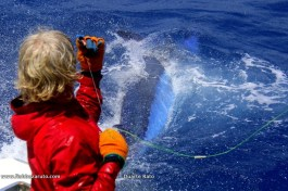 Catching blue marlin on pitch bait with Duarte in Cape Verde