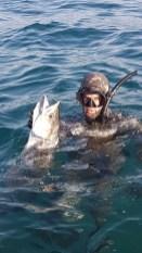 King Mackeral dominating underwater - KZN Spearfishing