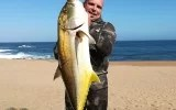 Blacktip kingfish speared off Durban