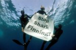 Stop Shark Finning at Shark Weekend Scottburgh 8 to 10 June 2019