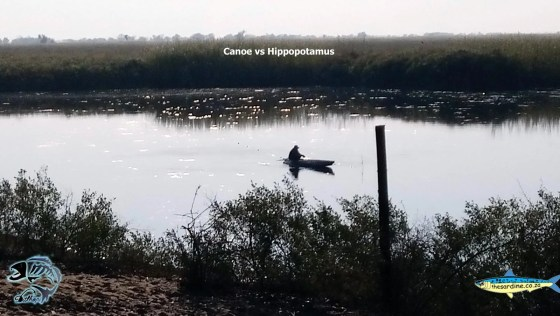 Okavango canoer has to deal with these huge animals daily