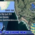 Sardines sighted in Coffee Bay by Spearfisherman