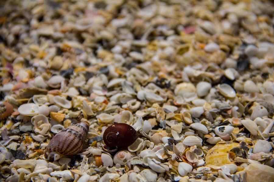 Shells on Herms Shell Beach