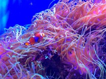 Finding Nemo spotted! :)