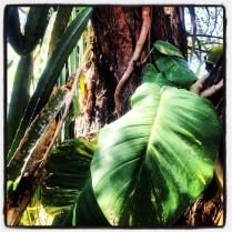 Somewhere in the jungle in Costa Rica.