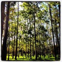 """On my morning walks in """"Parque de la Sabana"""" in San Jose, Costa Rica"""