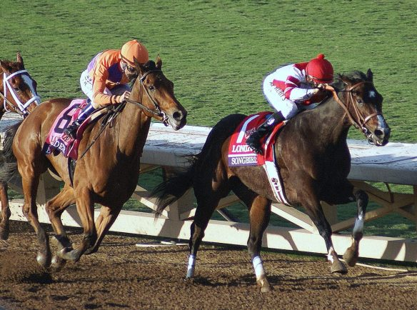 Beholder (left) and Songbird (right) battle down the stretch of the Distaff.  11-4-2016