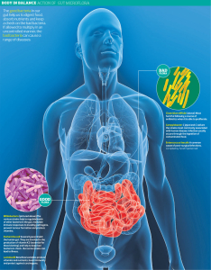 About Gut Bacteria and Diabetes