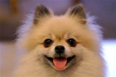 smilingdog2