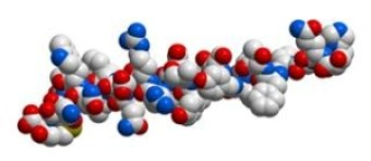 glucagon3dmolecule0816_1034868