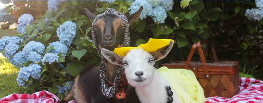 Savvy Pets, 10/11/19:  Goats are Drawn to Smiling Faces