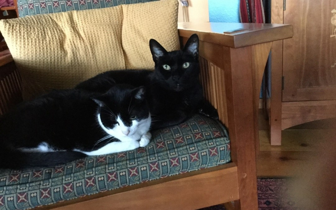 Savvy Pets, 6/26/20: Pure Love with Sir Oliver and Bella … Amazing Facts about Cats