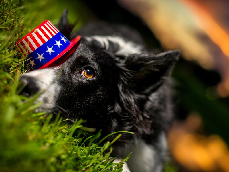 Savvy 4th of July, 2020:  Fireworks and Dogs