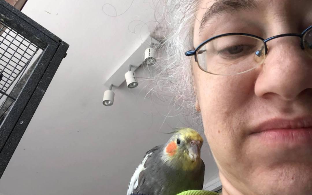 Savvy Pets, 3/12/21:  Birds, including Casey riding shotgun