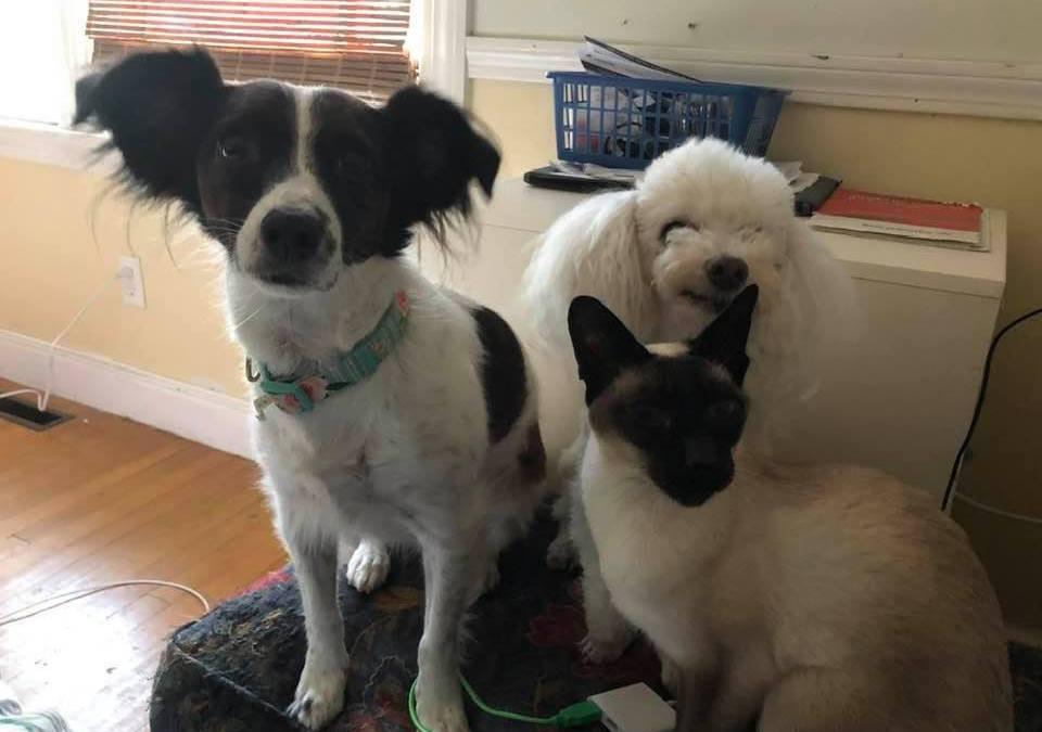 Savvy Pets, 4/16/21:  Callie's got LOTS of PETS!