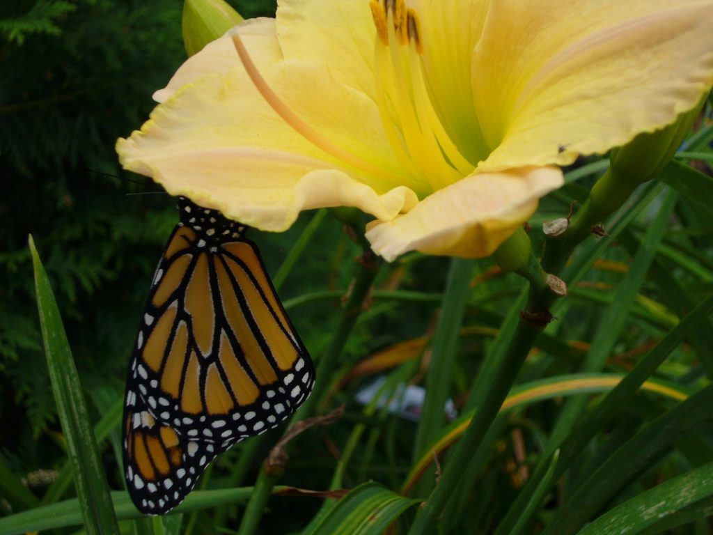Earthbound butterfly gardens