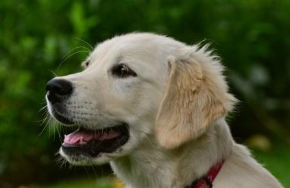 dog-2556796_1920