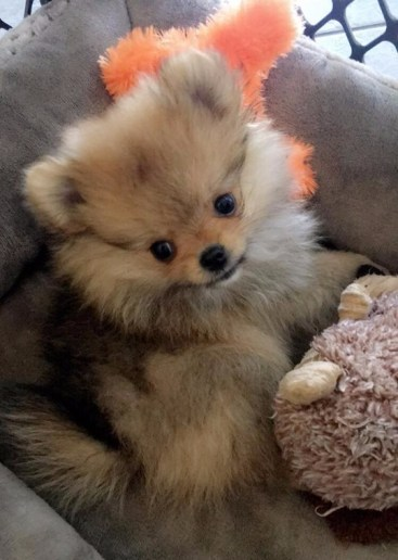 Oliver sitting in dog bed