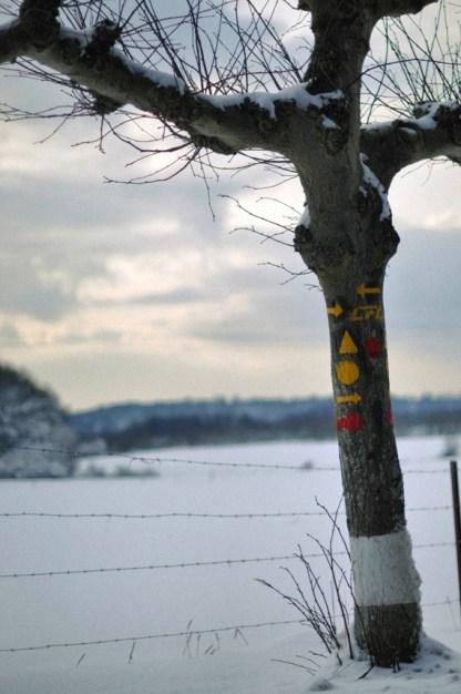 winter08colorWEB