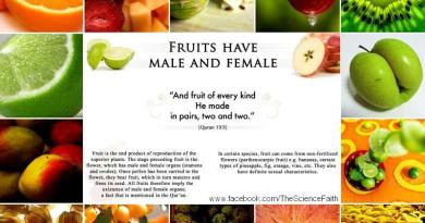 Fruits Created in Pairs - Male and Female