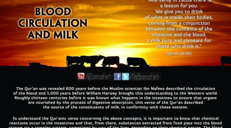 BLOOD CIRCULATION AND THE PRODUCTION OF MILK