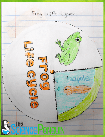 Frog life cycle wheel in the Primary Science Notebook